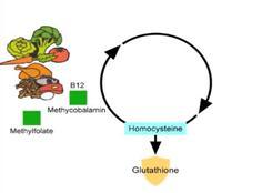 Glutation - Metylacja