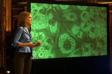 Komórki tłuszczowe
