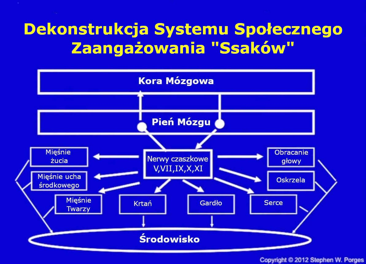 Dekontruckja systemu społecznego zaangażowania ssaków