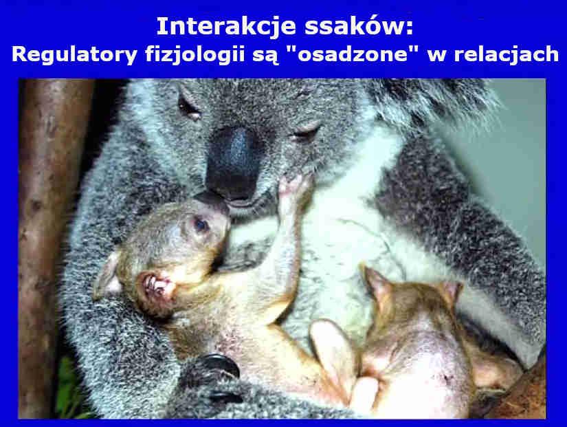 Interakcje ssaków