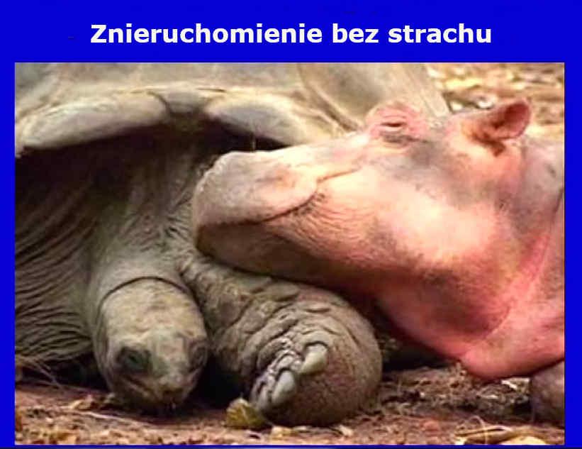 znieruchomienie bez strachu - zółw i hipopotan