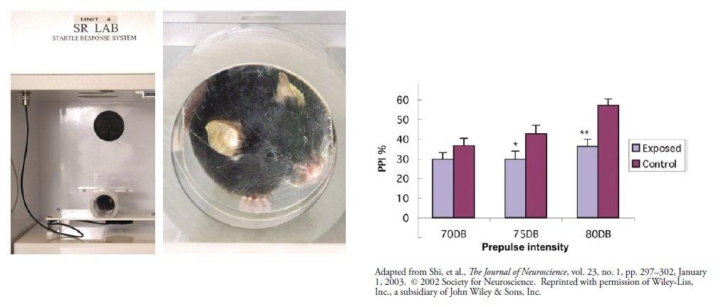 Maszyna zaskakująca mysz - Ciąża, Odporność, Schizofrenia i Autyzm