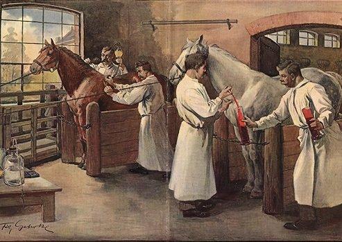Proces produkcji szczepionek z koni