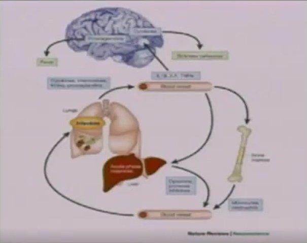 Im bardziej stymuluje się odporność systemową, tym silniejsza aktywacja mózgu