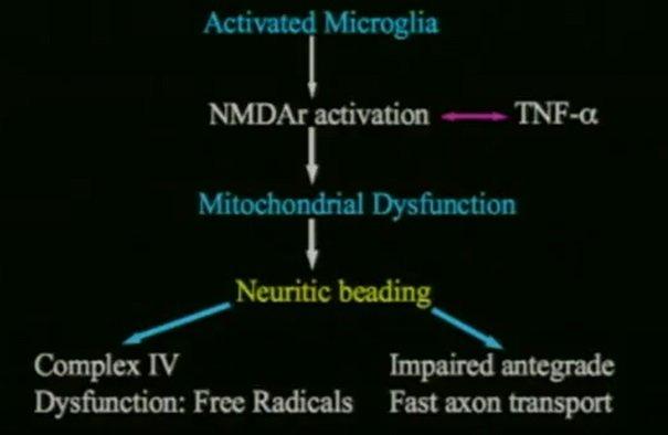 Komórki mikrogleju ulegają aktywacji, aktywują receptory glutaminianu, mózg staje się nadwrażliwy.