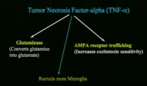 TNF-ɑ i synapsy