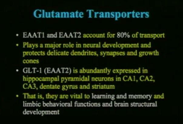 Transportery glutaminianu