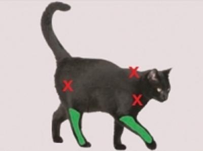szczepić kota w kończyny