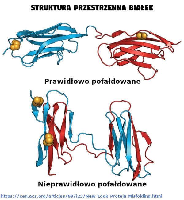 Struktura przestrzenna białek
