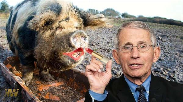 Dr Anthony Fauci - promowanie szczepionek, malowanie świni ryja