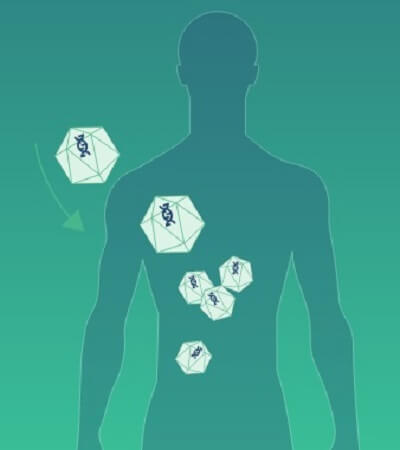 Biodystrybucja wektora wirusowego