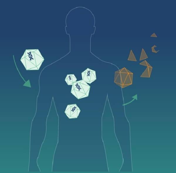 Przegląd omawiający rozsiewanie wektorów wirusowych