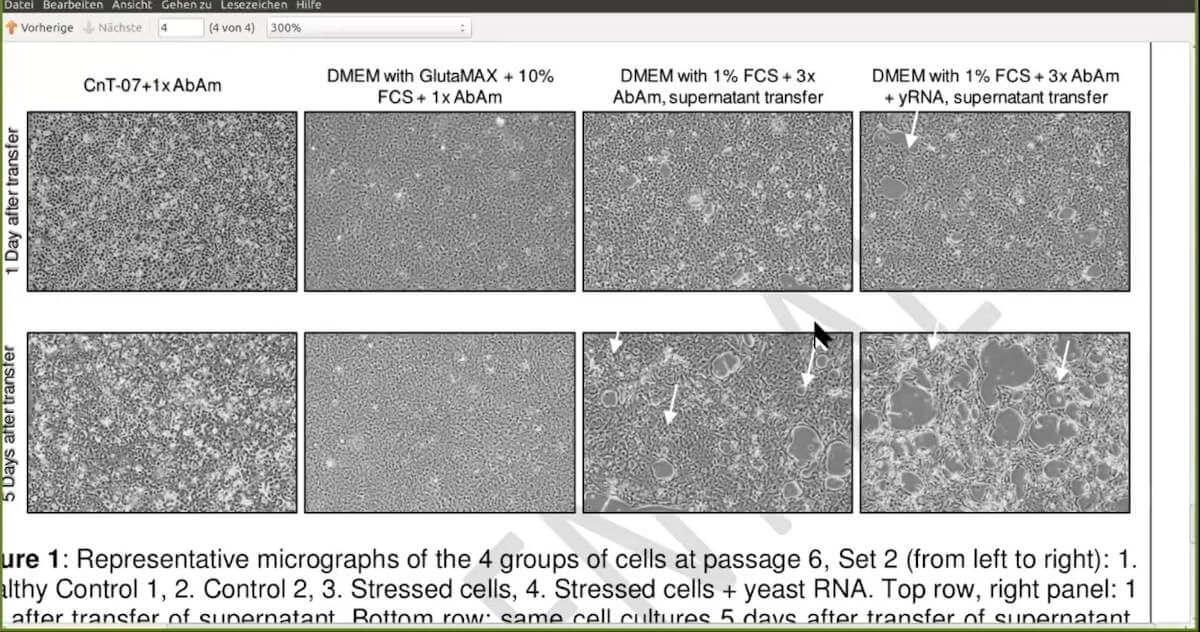 Efekt cytopatyczny (CPE) - eksperyment kontrolowany – dr Stefan Lanka