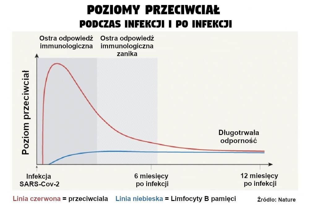 Poziomy przeciwciał podczas infekcji i po infekcji
