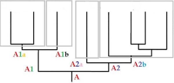 Haplogrupy dzielą się na dodatkowe podgrupy - gałęzie (subklad)